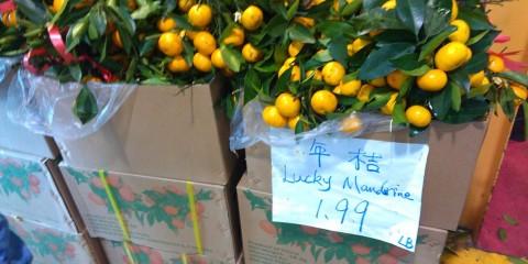 lucky mandarin oranges